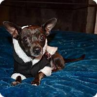 Adopt A Pet :: Mika - Clayton, CA