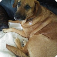Adopt A Pet :: Daisey - Northumberland, ON
