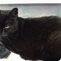 Adopt A Pet :: Baby - Bridgeton, MO
