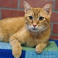 Adopt A Pet :: Walter - Tucson, AZ