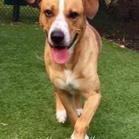 Adopt A Pet :: Ralph - Land O'Lakes, FL