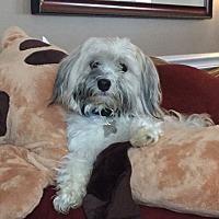 Adopt A Pet :: Butte - DAYTON, OH