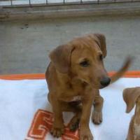 Adopt A Pet :: Baker - Waxahachie, TX