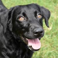 Adopt A Pet :: Kenzie - - Ridgeland, SC