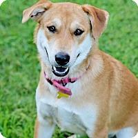 Adopt A Pet :: Sabrina - Salt Lake City, UT