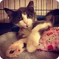 Adopt A Pet :: Kolby - Cleveland, OH