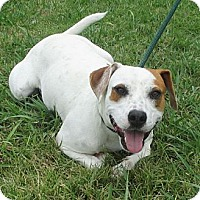 Adopt A Pet :: BUSTER/Summer Special Pricing - Glastonbury, CT