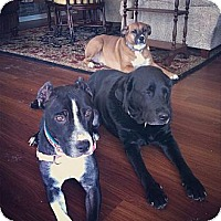 Adopt A Pet :: Nadia - Indianapolis, IN