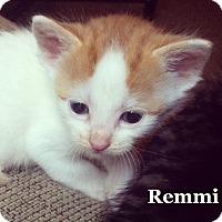 Adopt A Pet :: Remmy - Bentonville, AR