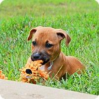Adopt A Pet :: Gracie - Bedminster, NJ
