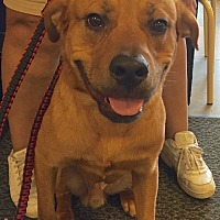 Labrador Retriever Mix Dog for adoption in Smyrna, Georgia - King