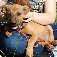 Adopt A Pet :: Flicka(15 lb) New Pics & Video - SUSSEX, NJ