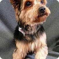 Adopt A Pet :: Tavia Miller - Urbana, OH