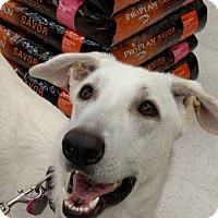 Adopt A Pet :: Sierra-Referral - Dripping Springs, TX