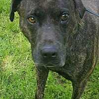 Adopt A Pet :: Randy - Blakely, GA