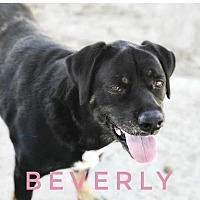 Adopt A Pet :: Beverly - Ocala, FL