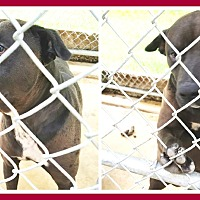 Adopt A Pet :: BUDDY - Malvern, AR