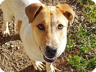 Hound (Unknown Type) Mix Dog for adoption in Kingston, Tennessee - Yoda