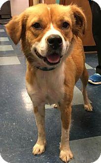 Spaniel (Unknown Type) Mix Dog for adoption in Centerville, Georgia - Rhianne