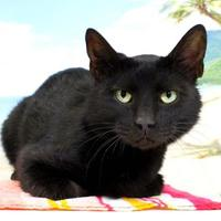 Adopt A Pet :: Dave - Harrisonburg, VA
