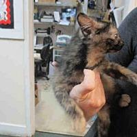 Adopt A Pet :: MANDY - Fort Walton Beach, FL