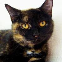 Adopt A Pet :: Annabelle - Greenwood, SC
