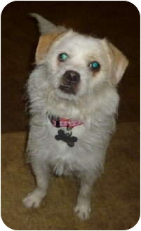 Terrier (Unknown Type, Small) Mix Dog for adoption in Sacramento, California - Serena