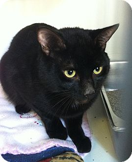 Domestic Shorthair Cat for adoption in Port Hope, Ontario - Lucky