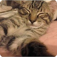 Adopt A Pet :: Stan Lee - Lakeland, FL
