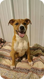 Terrier (Unknown Type, Medium) Mix Puppy for adoption in Lima, Ohio - Sangria *PENDING*