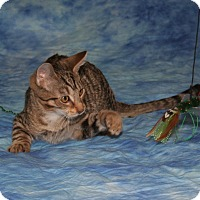Adopt A Pet :: Tiki - Cincinnati, OH
