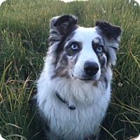 Adopt A Pet :: Dakota - Bellingham, WA