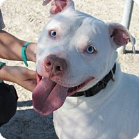Adopt A Pet :: Petey - Windsor, VA