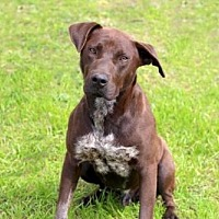 Adopt A Pet :: DIAMOND JIM - Franklin, TN