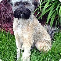 Adopt A Pet :: Ryder 2 - Bridgeton, MO