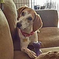 Adopt A Pet :: Chica - DeSoto, IA