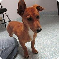 Adopt A Pet :: Charlie Dog - Shawnee Mission, KS