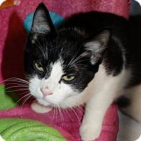 Adopt A Pet :: Timber - Salem, WV