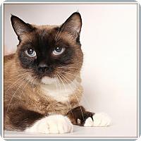 Adopt A Pet :: Diane - Glendale, AZ