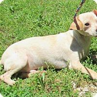 Adopt A Pet :: Raven - Reeds Spring, MO