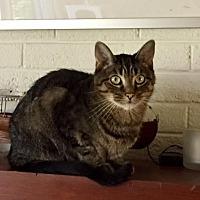 Adopt A Pet :: Montgomery - Fairfax, VA