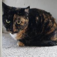 Adopt A Pet :: Maggie (Cocoa Center) - Cocoa, FL