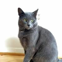 Adopt A Pet :: Roman - Toronto, ON