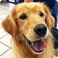 Adopt A Pet :: Candy - BIRMINGHAM, AL
