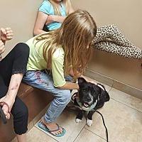 Adopt A Pet :: Grover - Aurora, IL
