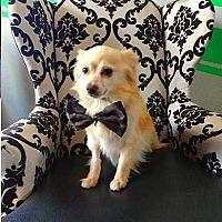 Adopt A Pet :: Flynn - Studio City, CA