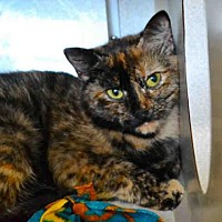 Adopt A Pet :: *MADISON - Chapel Hill, NC