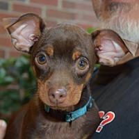 Adopt A Pet :: Lee Calhoun - Seattle, WA