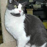 Adopt A Pet :: Stephanie (FCID# 11/18/16-101 KOP PS) - Greenville, DE