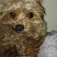Adopt A Pet :: COPPER -17 - Lithia, FL